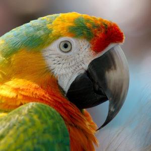 Exotische- und Ziervögel