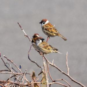 Wild- und Gartenvögel